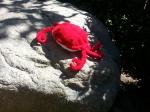 knittedredcrab